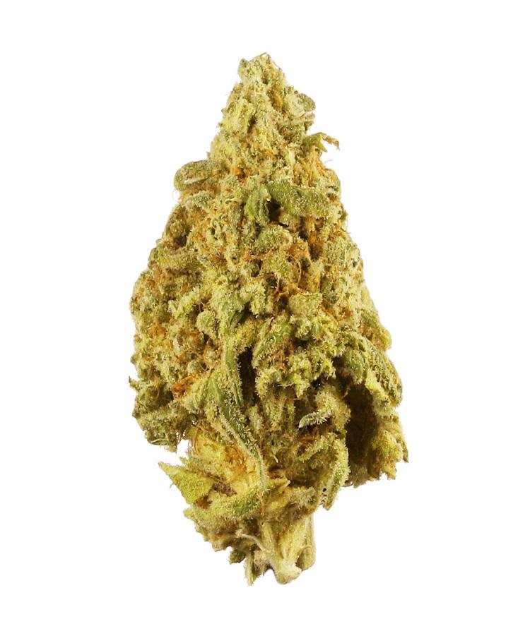 9 lb strain