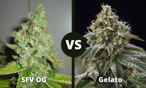SFV OG vs Gelato