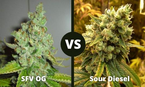 SFV OG vs Sour Diesel