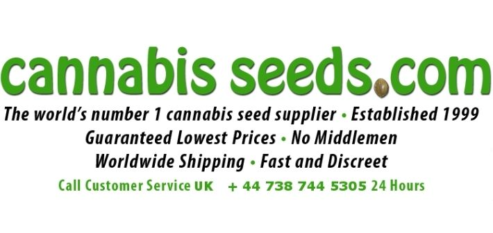 about cannabis seeds