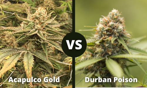 acapulco gold vs durban poison