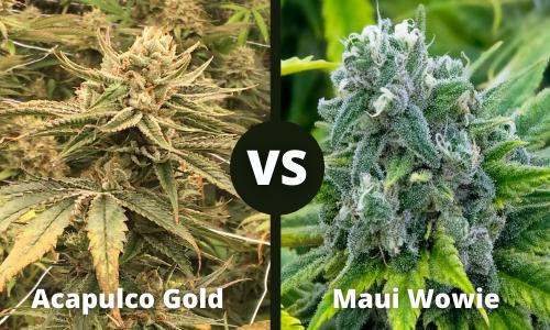 acapulco gold vs maui wowie