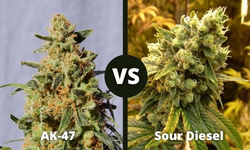 ak47 vs sour diesel