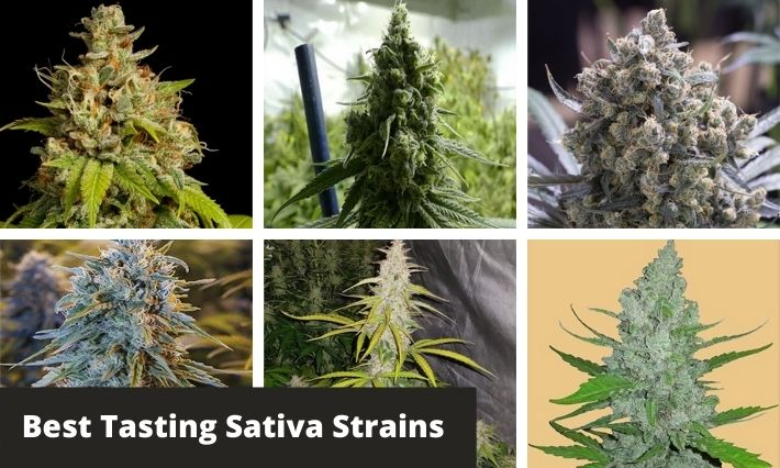 best tasting sativa strains