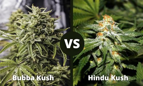 bubba kush vs hindu kush