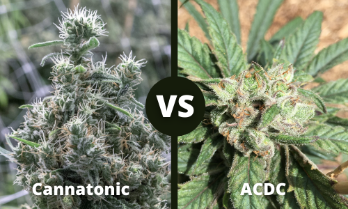 cannatonic vs acdc