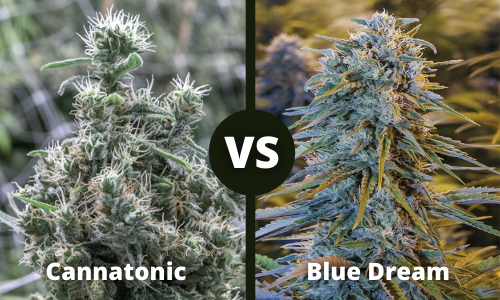 cannatonic vs blue dream