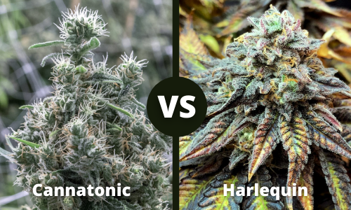 cannatonic vs harlequin