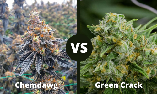 chemdawg vs green crack