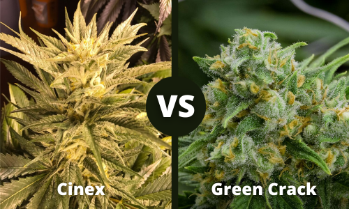 cinex vs green crack