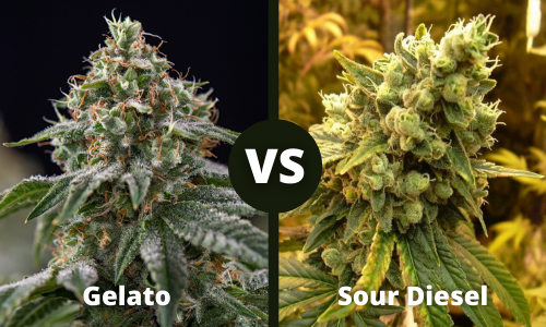 gelato vs sour diesel