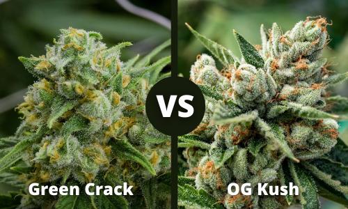 green crack vs og kush