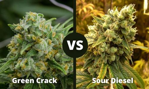 green crack vs sour diesel