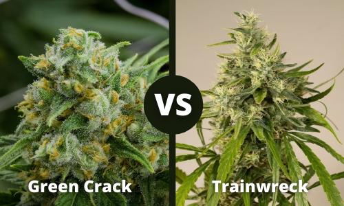 green crack vs trainwreck