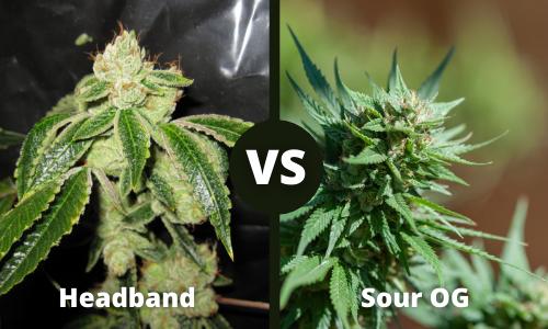headband vs sour og