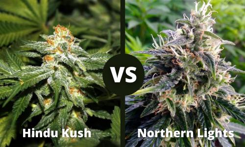 Hindu Kush vs Northern Lights