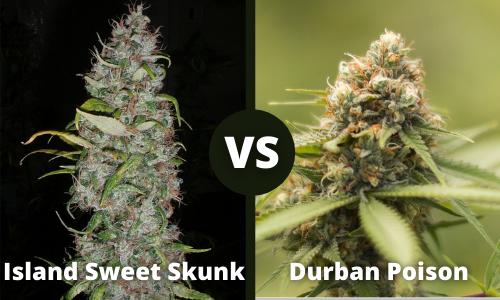 island sweet skunk vs durban poison