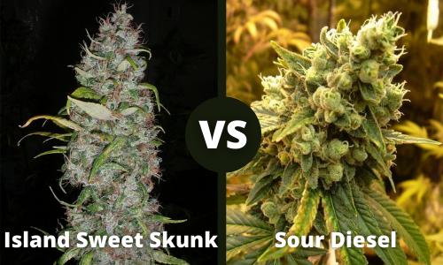 island sweet skunk vs sour diesel