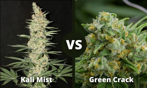kali mist vs green crack