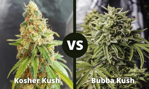 kosher kush vs bubba kush