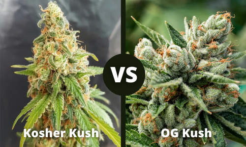 kosher kush vs og kush