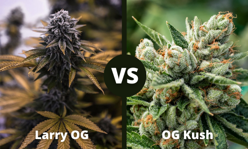 larry og vs og kush