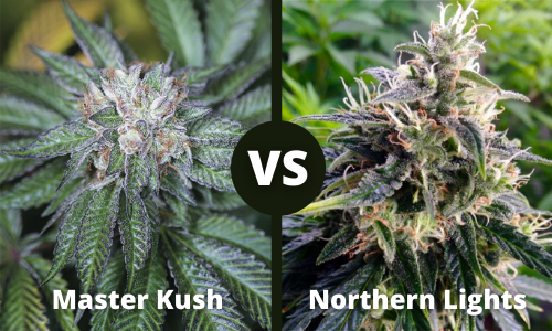 master kush vs northern lights