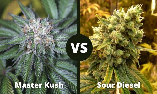 master kush vs sour diesel