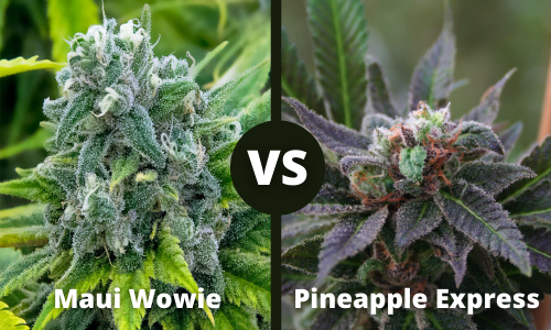 maui wowie vs pineapple express