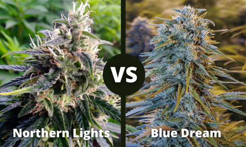 Northern Lights vs Blue Dream
