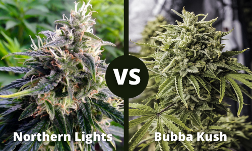 northern lights vs bubba kush