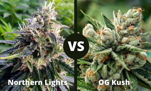 northern lights vs og kush