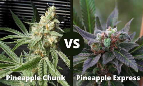 pineapple chunk vs pineapple express