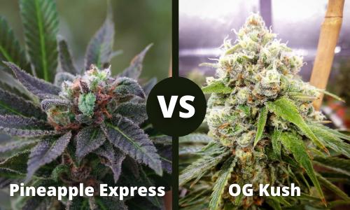 pineapple express vs og kush