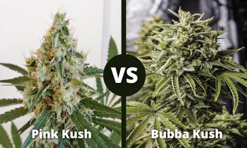 Pink Kush vs Bubba Kush