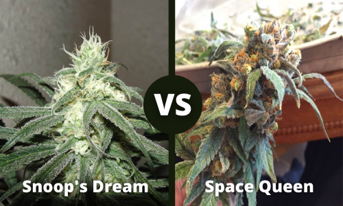 snoop's dream vs space queen