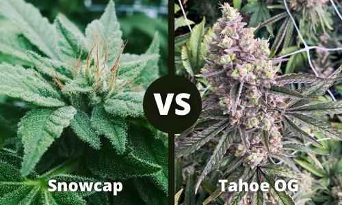 snowcap vs tahoe og