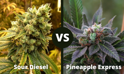 sour diesel vs pineapple express