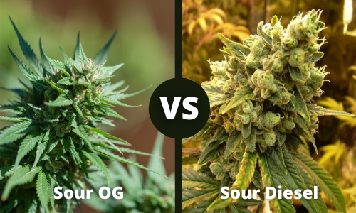 sour og vs sour diesel