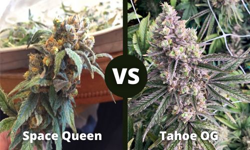 space queen vs tahoe og