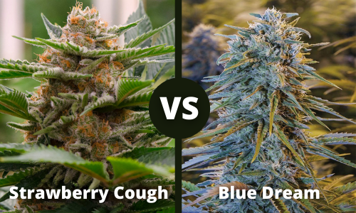 strawberry cough vs blue dream