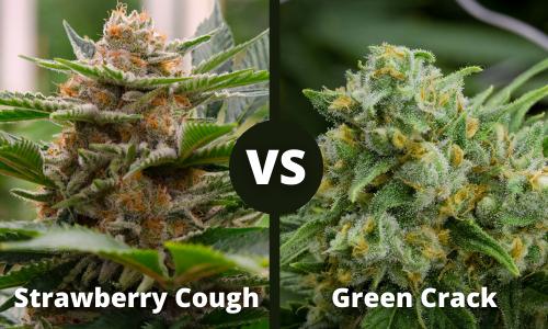 strawberry cough vs green crack