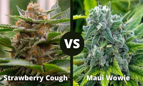 strawberry cough vs maui wowie