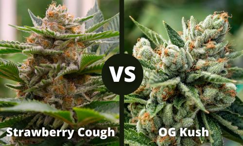strawberry cough vs og kush
