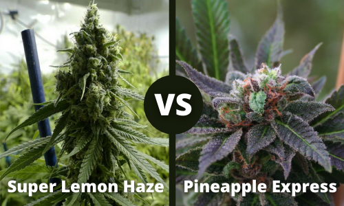super lemon haze vs pineapple express