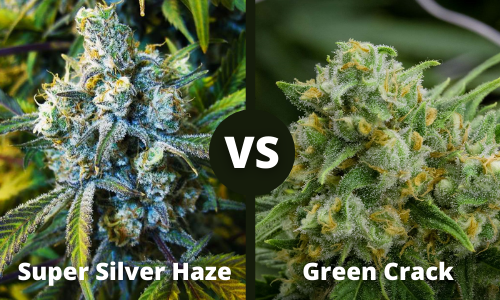 super silver haze vs green crack