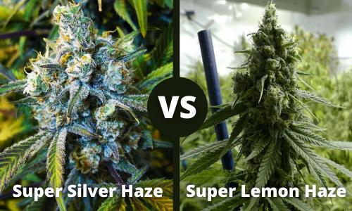 super silver haze vs super lemon haze
