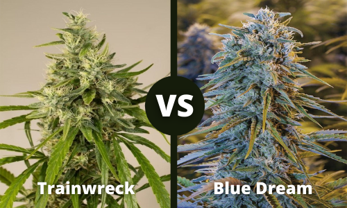 trainwreck vs blue dream