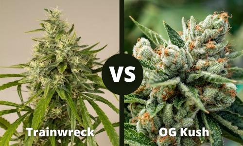 trainwreck vs og kush