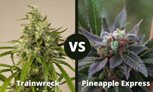 trainwreck vs pineapple express